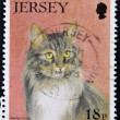 JERSEY - CIRCA 1994: A stamp printed in Jersey shows a cat, maine coon, circa 1994 — Stock Photo #9444451