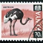 KENYA - CIRCA 1969: A stamp printed in Kenya shows an ostrich, circa 1969 — Stock Photo #9444500