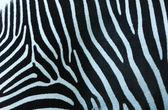 Textura zebra. — Fotografia Stock