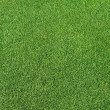 Perfect green grass - Stock Photo