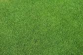 Perfect green grass — Stock Photo