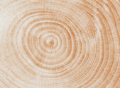 Wooden cut texture. — Stock Photo