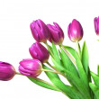 Beautiful tulips isolated on white. — Stock Photo