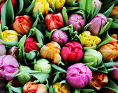 Bouquet of multicolor tulips over blurred green background. — Stock Photo