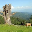 White and brown cow close to a funny tree — Stock Photo #12583417
