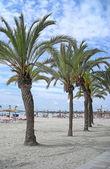 Пальмы на берегу моря — Стоковое фото