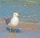 Seagull and foreshore — Stock Photo