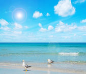 Two seagull on the foreshore — Stock Photo
