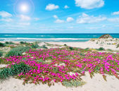Flowers and sand in spring — Stock Photo