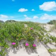 Dune and flowers — Stockfoto