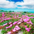 Fuchsia flowers and white clouds — Stock Photo