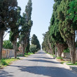 Cypress avenue — Stock Photo #24948771