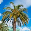 Palm in the city — Stock Photo #24949033
