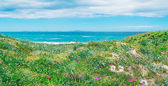 Champ vert et bleu de la mer — Photo