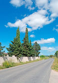 Two cypresses — Stock Photo