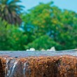 Fountain and trees — Stock Photo