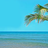 Palmy a voda — Stock fotografie