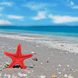 Red starfish — Stock Photo #27850077