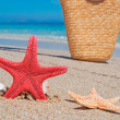 Seastar and bag — Stock Photo