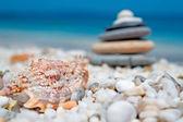 Shell e pedras — Fotografia Stock