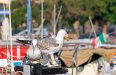 Seagulls on boat — Stock Photo