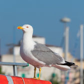 Seagull on a buoy — Stock Photo