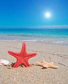 Starfish and sun — Stock Photo