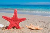 Estrella roja — Foto de Stock