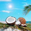 Palm and coconuts under the sun — Stock Photo #29329395