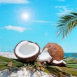 Palm and coconuts under the sun — Stock Photo