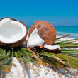 Coconuts and beach — Stock Photo