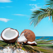 Palm and coconuts — Foto de Stock