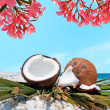 Flowers and coconuts — Stock Photo