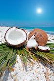 Sun over coconuts — Stock Photo