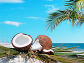Palm and coconuts — Stock Photo