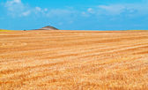 Yellow field under a blue sky — Stock Photo