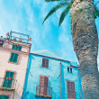 Blue building and palm — Stock Photo