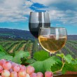 Red and white wine in a vineyard — Stockfoto