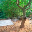 Stock Photo: Two hammocks