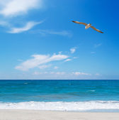 Seagull flying over the sea — Stock fotografie