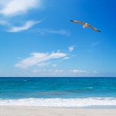 Denizin üzerinde uçan martı — Stok fotoğraf