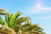 Palmy i słońce — Zdjęcie stockowe
