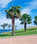 Sardinia palms — Stock Photo