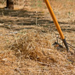 Rake and grass — Stock Photo