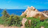 Rocks and vegetation — Stock Photo