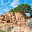 Rocks and pine tree — Stockfoto