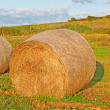 Stock Photo: Hay bale at dusk
