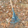 Rake with leaves — Stock Photo