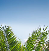 Palm branches — Stockfoto