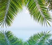 Palm reflection — Stock Photo